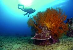 reef 1